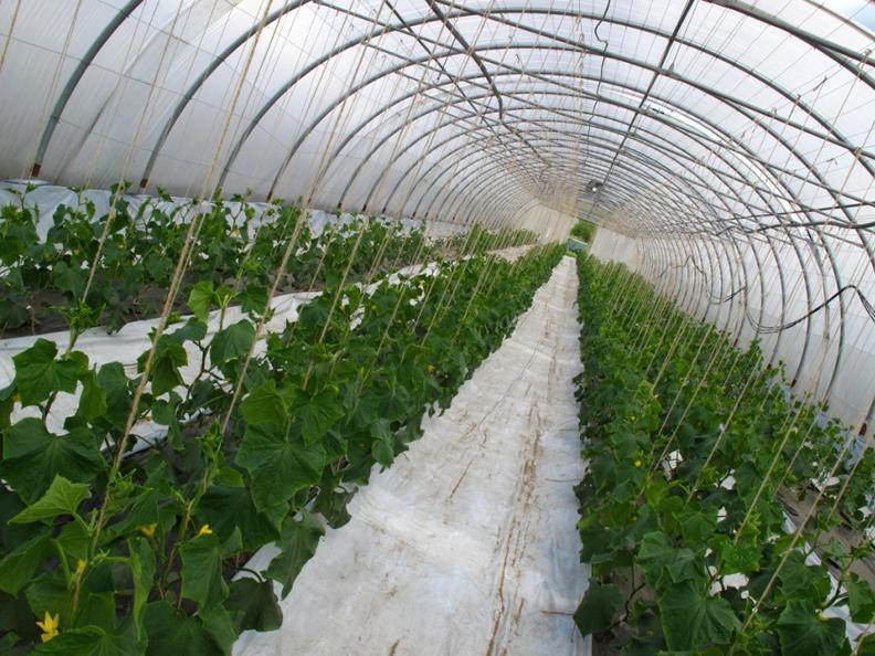 Image 3 - Polo Agricolo - Laboratorio Incontro 2
