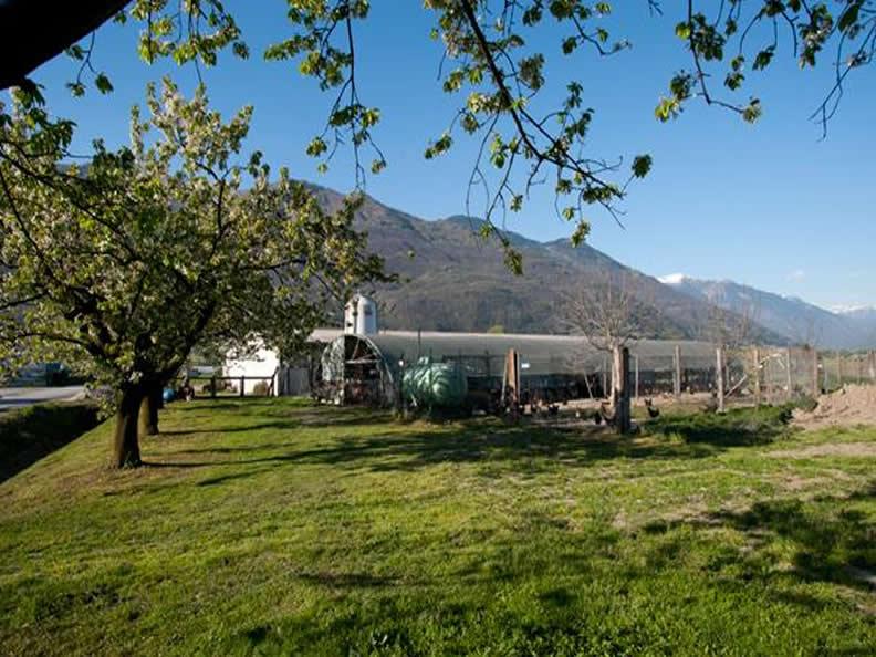 Image 3 - Azienda agricola Claudio Guerra - Agriturismo La Ciossa