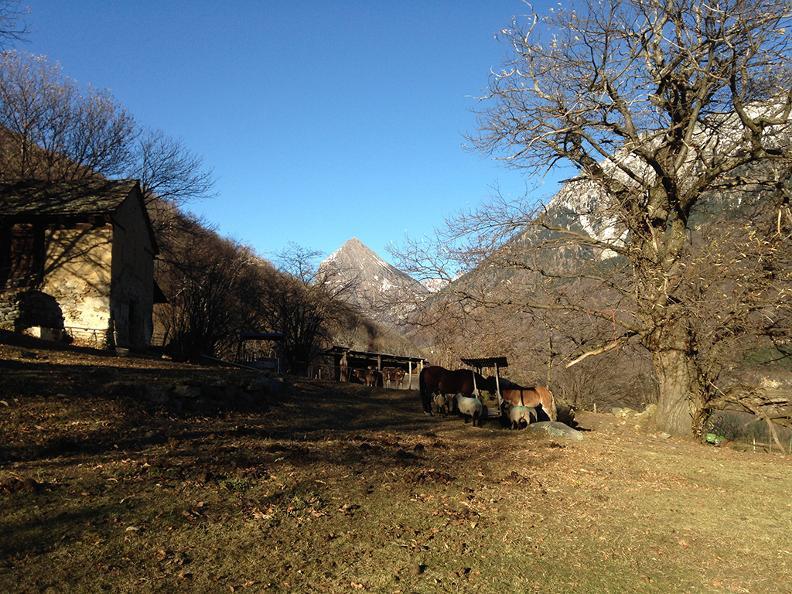 Image 1 - Azienda agricola di montagna