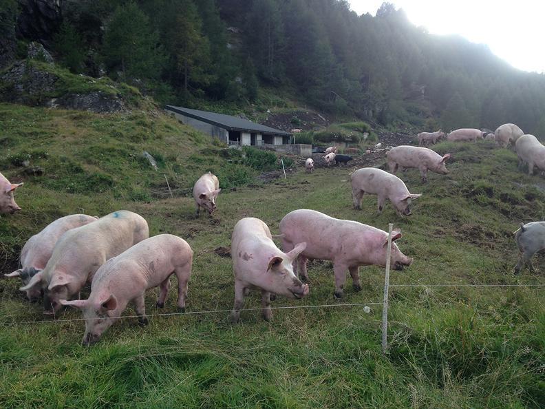 Image 2 - Azienda agricola di montagna