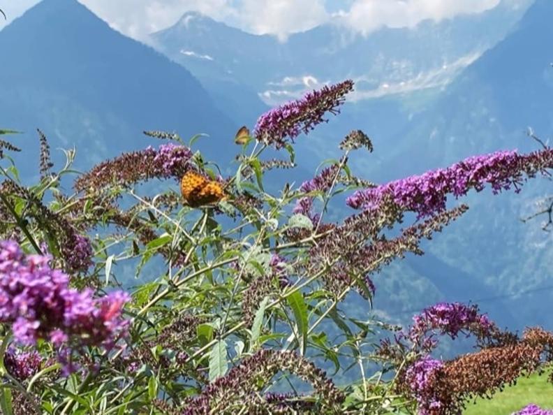 Image 2 - Tipico Chalet leventinese in un angolo di paradiso