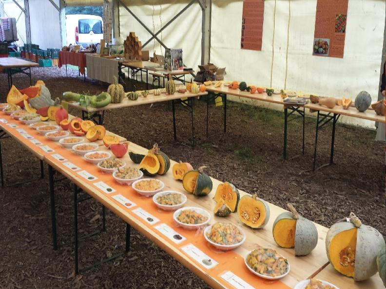 Image 1 - The Pumpkin market - 6th edition