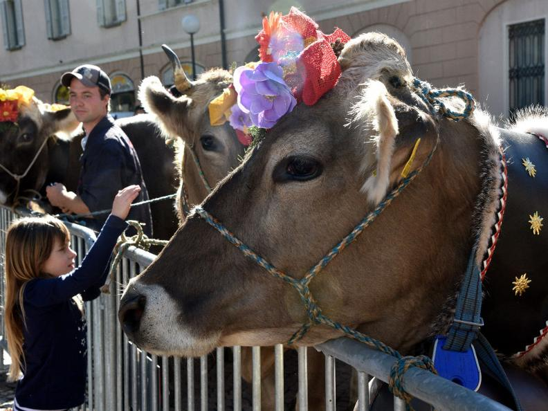 Image 9 - Autumn festival & cheese market