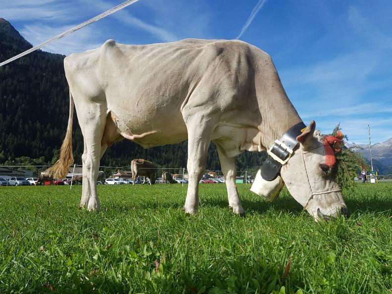 Image 1 - Landwirtschaft- und Käsefest im Leventinatal