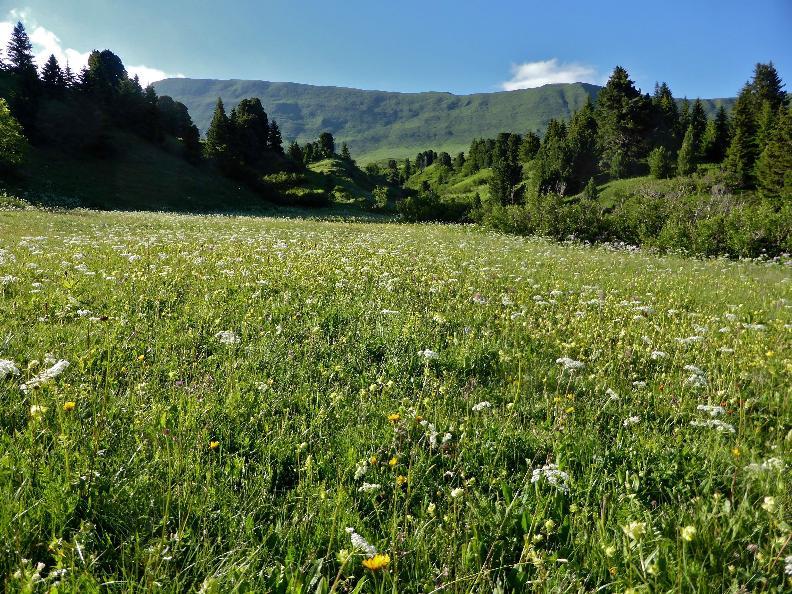 Image 2 - Sentieri Naturalistici del Lucomagno - Gite accompagnate 2020