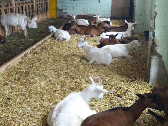 Colazione in fattoria!