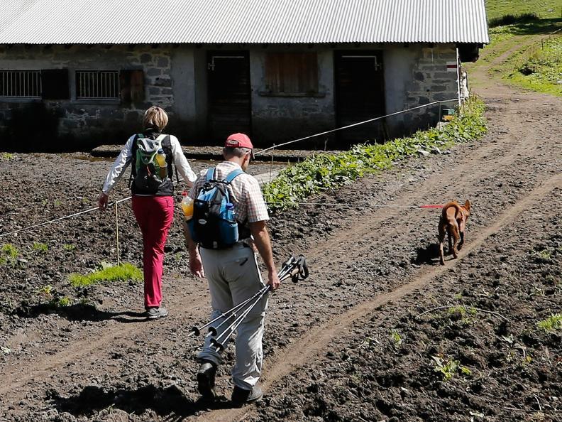 Image 2 - I cani da protezione delle greggi