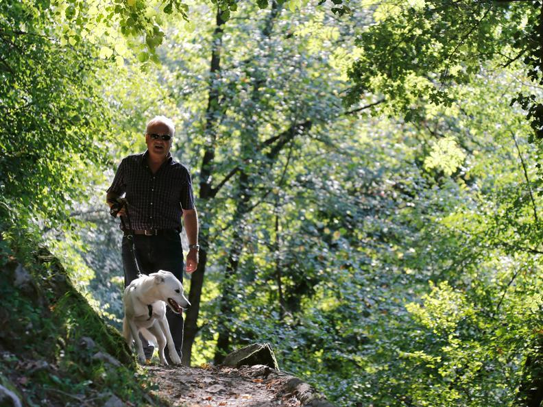 Image 3 - I cani da protezione delle greggi