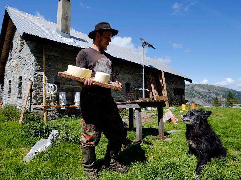 Image 1 - I cani da protezione delle greggi