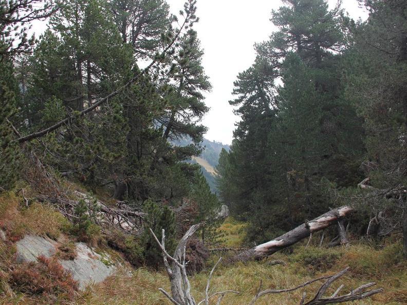 Image 3 - Réserve forestière Selvasecca