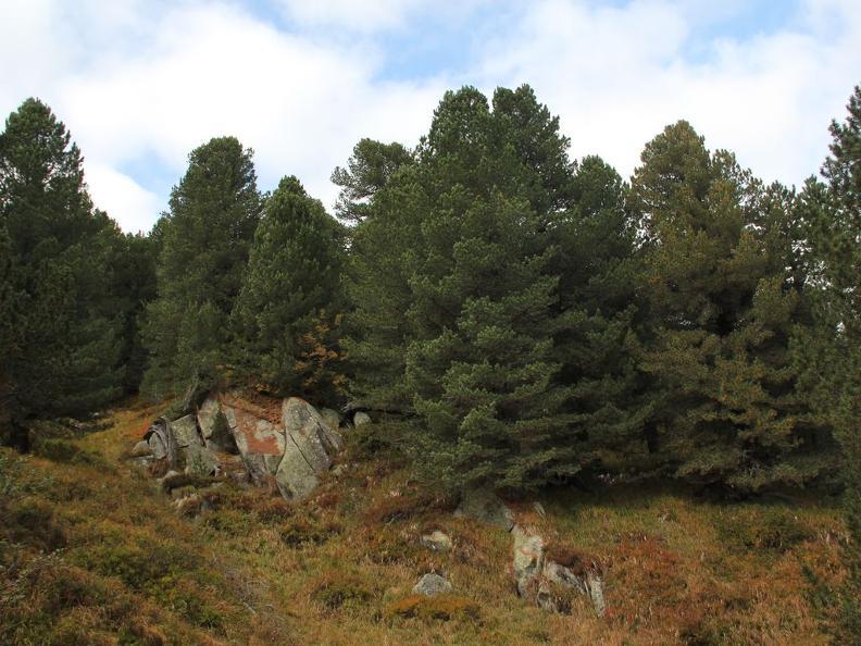 Image 4 - Réserve forestière Selvasecca