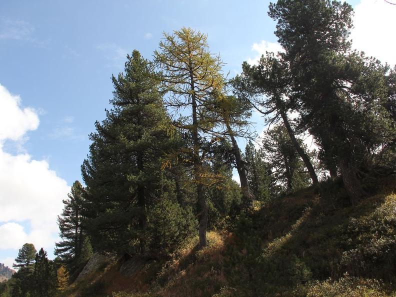 Image 6 - Réserve forestière Selvasecca
