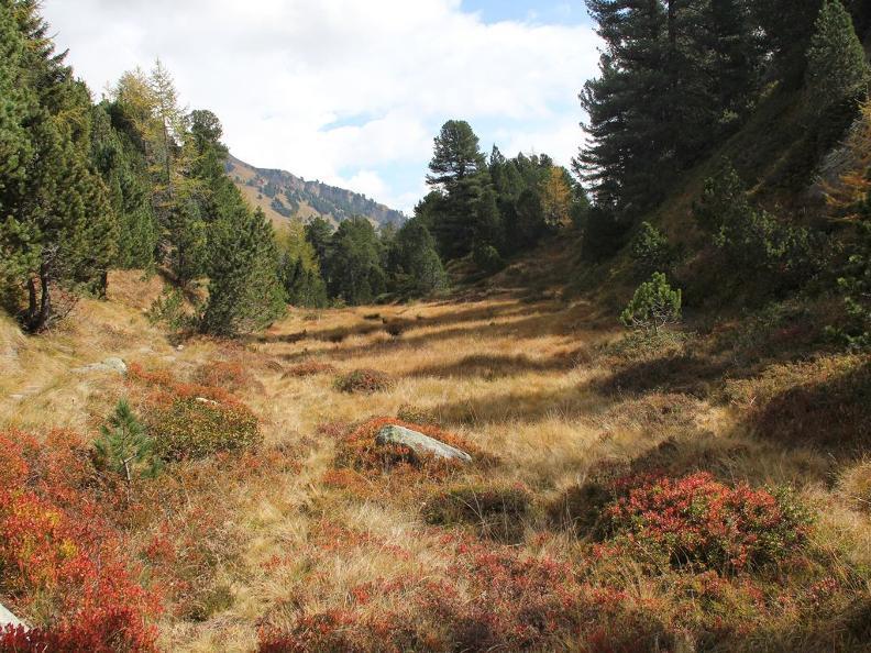 Image 1 - Réserve forestière Selvasecca