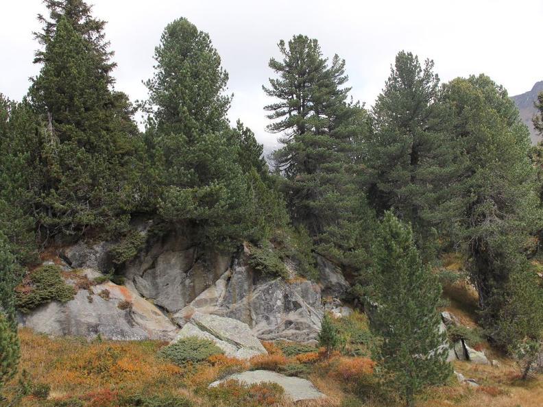 Image 5 - Réserve forestière Selvasecca