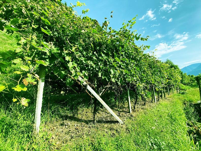 Image 10 - Wine cellar Settemaggio