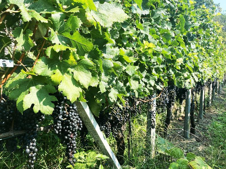 Image 12 - Cave vinicole Mondò