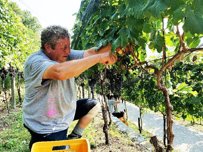 Image 9 - Cave vinicole Mondò