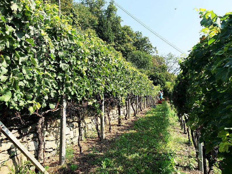Image 2 - Wine cellar Mondò