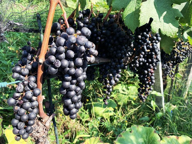 Image 3 - Cave vinicole Mondò