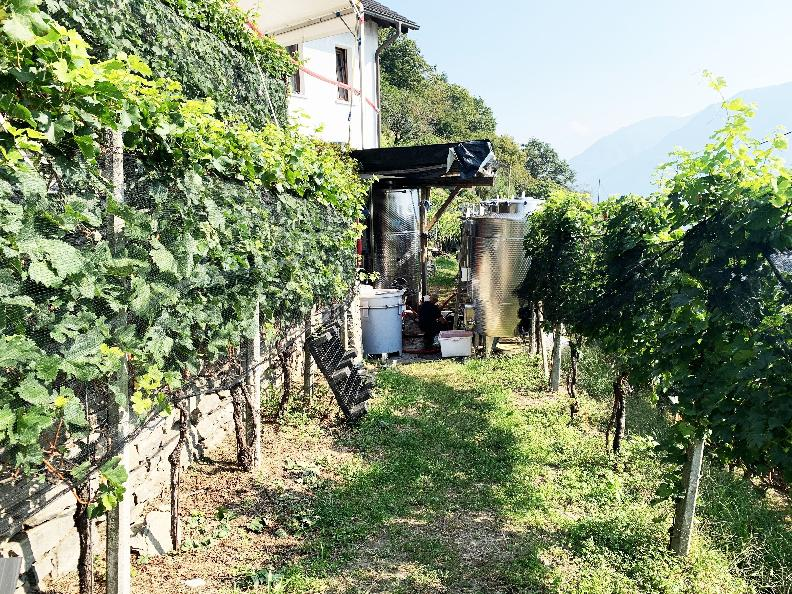 Image 1 - Wine cellar Mondò