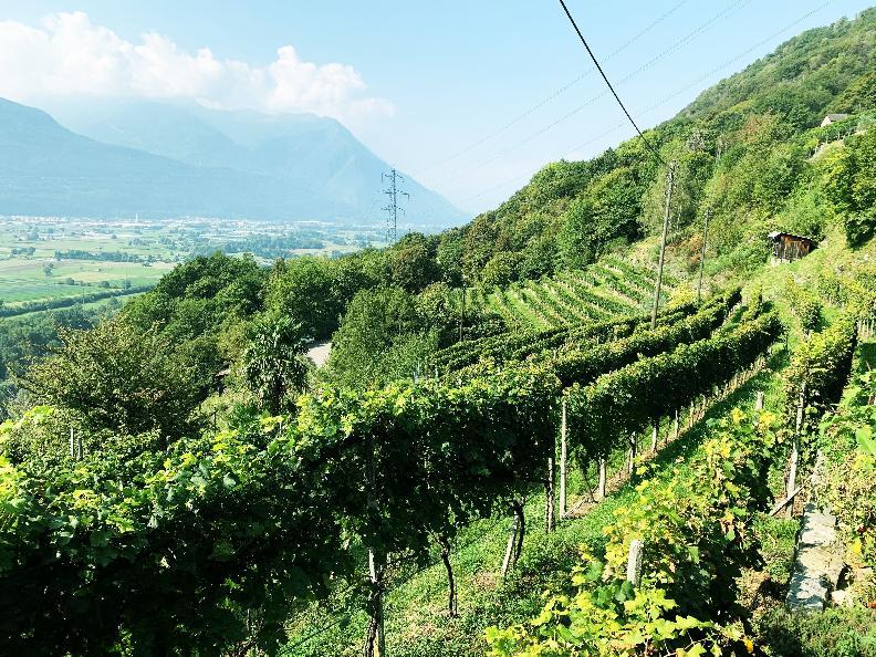 Image 10 - Cave vinicole Mondò