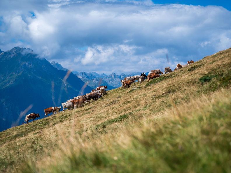 Image 11 - Seggiovia Carì - estate