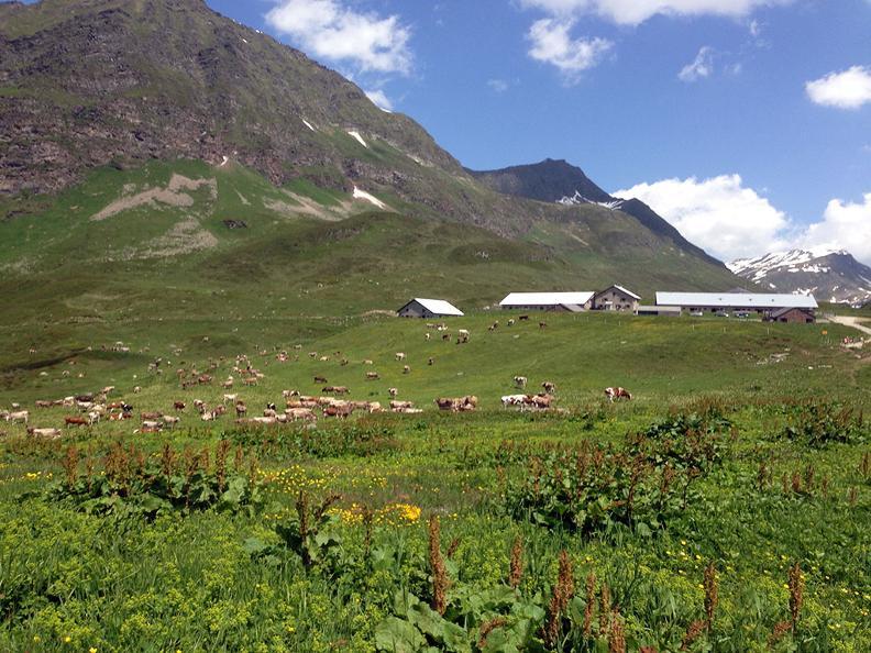 Image 7 - Alpe Piora