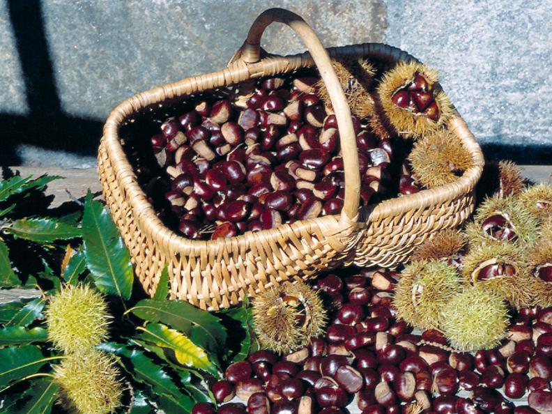 Image 2 - The chestnut