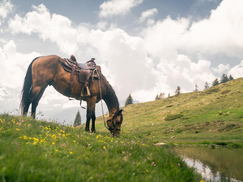 Image 12 - Equitazione in Valle Leventina: Leventina Western