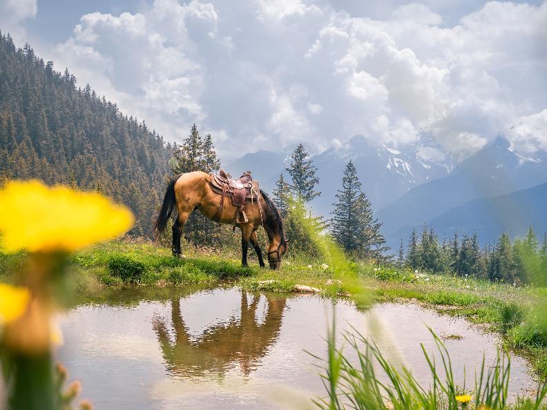 Image 9 - Equitazione in Valle Leventina: Leventina Western