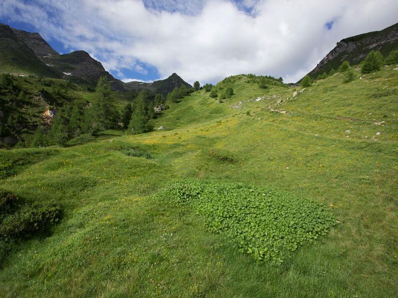 Image 1 - Naturetum - Centro Pro Natura Lucomagno
