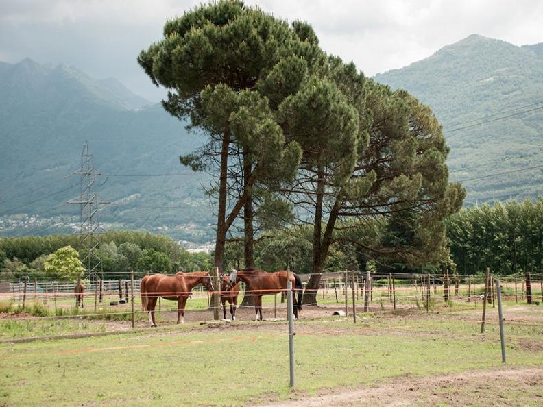 Image 0 - Scuderia Progero