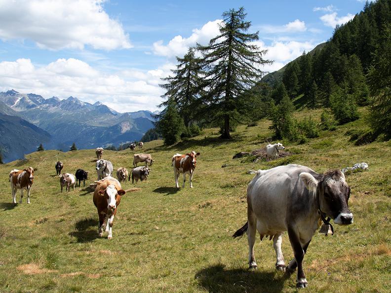 Image 7 - La Strada degli Alpi della Valle Bedretto