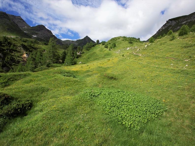 Image 3 - The Lucomagno cheese route