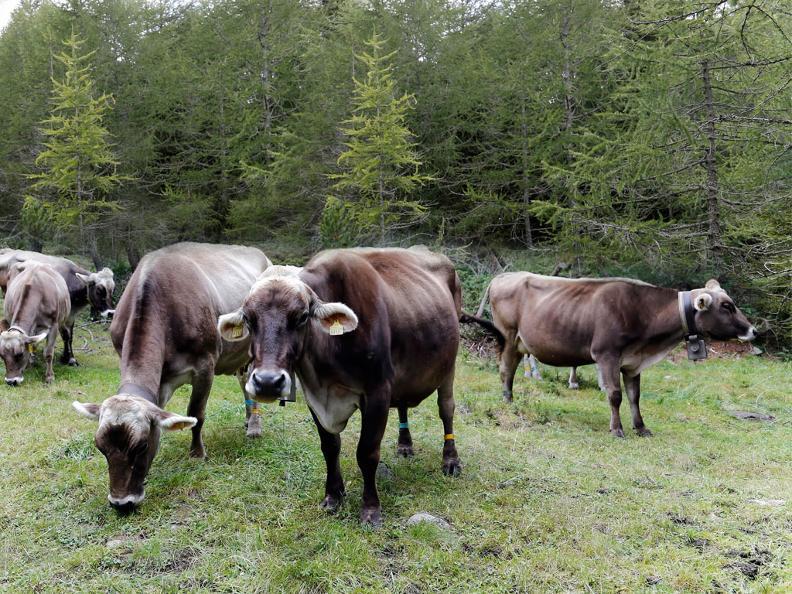 Image 1 - I formaggi in Val Pontirone
