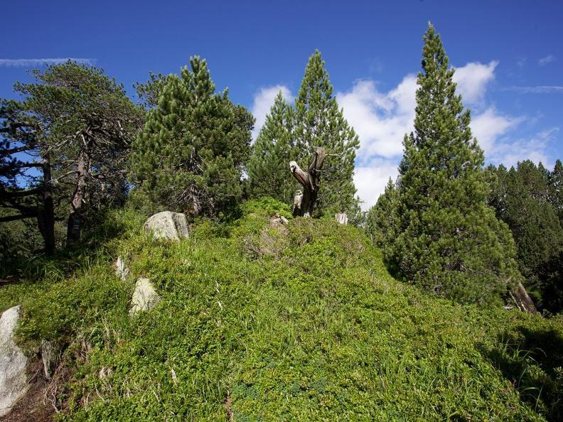 Image 2 - Nella foresta di pino cembro sul Lucomagno