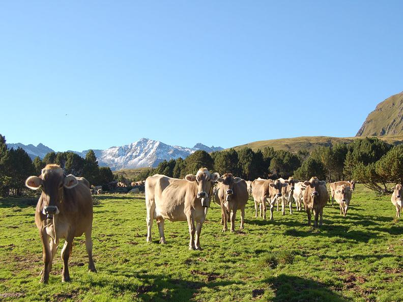 Image 5 - Alpi del Lucomagno