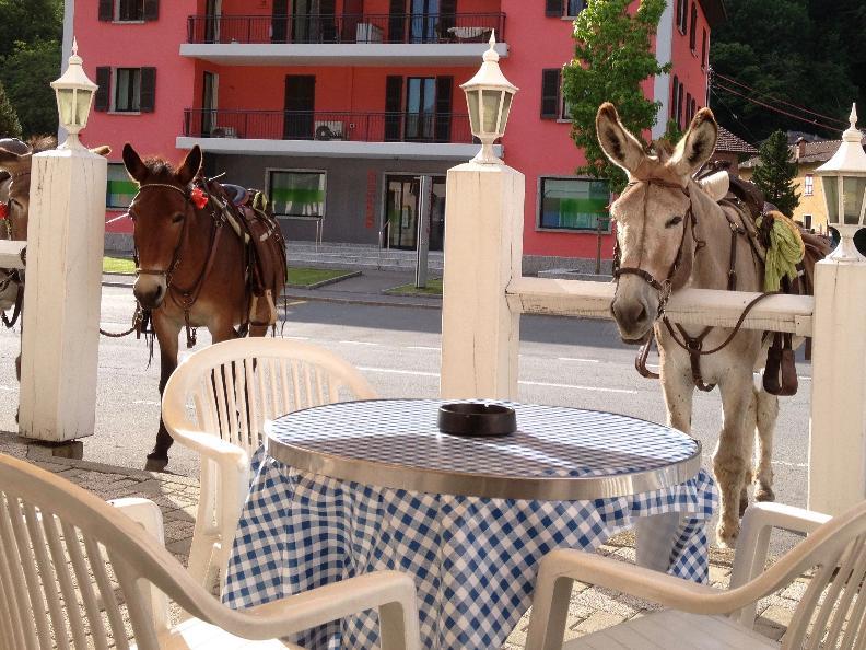 Image 0 - Viaggio gastronomico con i somarelli