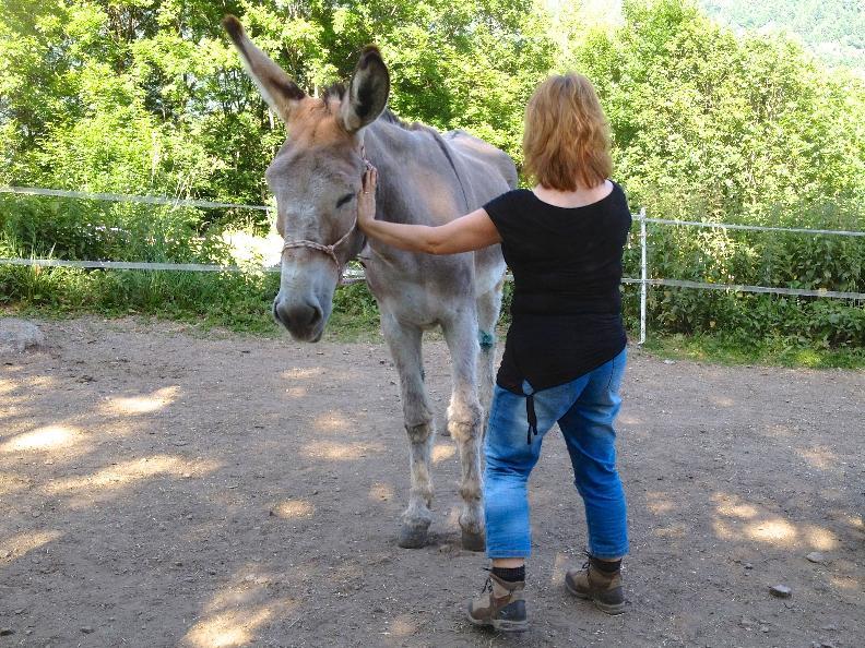 Image 1 - Animali come gentili guide